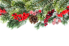 Christmas tree branch with red decoration Royalty Free Stock Images