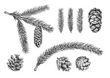 Christmas tree branch. Sketch. Set of different cones and branches of christmas tree. Fir tree, cedar, pine. Hand drawn sketch. Vector illustration Stock Photography