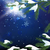 Christmas tree branch snow Stock Images