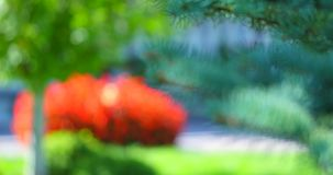 Christmas tree branch on a sunny day.  stock footage