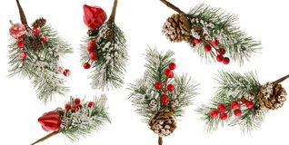 Christmas Tree Branch With Snow, Red Berries And Cones Isolated On White Background As Set Of Details For Winter Design Stock Photo