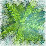 Christmas tree branches against snow background. Christmas green background Stock Photo