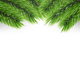 Christmas tree branches background. Fir branches  on white.  Stock Image