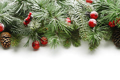 Christmas tree branches background Stock Photos