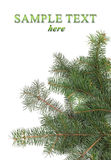 Christmas tree branches border Stock Images