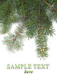 Christmas tree branches border Royalty Free Stock Image