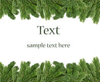 Christmas Tree Branches Border Stock Image