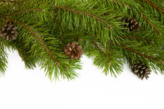 Christmas tree branches border on a white background. Stock Images