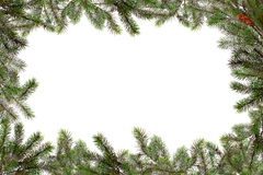 Christmas Tree Branches Bordering Copy Space Royalty Free Stock Images