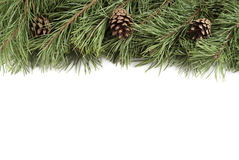 Christmas tree branches and bumps on a white background with copyspace Royalty Free Stock Photography