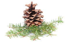 Christmas tree branches and cone royalty free stock photo
