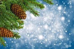 Christmas tree branches with cones on blue background Stock Photo