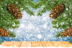 Christmas tree branches with cones   on blue background Royalty Free Stock Images