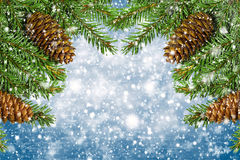 Christmas tree branches with cones. isolated over blue Royalty Free Stock Image