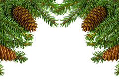 Christmas tree branches with cones. isolated over white Stock Photo