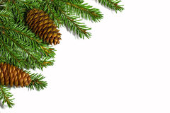Christmas tree branches with cones isolated on white background Stock Photos