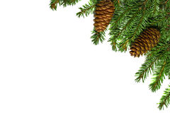 Christmas tree branches with cones isolated on white background Stock Images