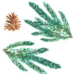 Holiday symbol Watercolor Christmas tree branches and conifer cone isolated on white background. vector illustration