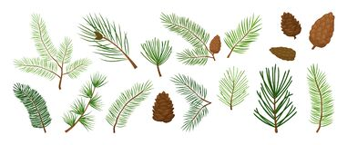 Christmas tree branches, fir and pine cones, evergreen vector set, holiday decoration, winter symbols. Nature illustration