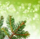 Christmas tree branches. Christmas tree branches  on green Royalty Free Stock Photos