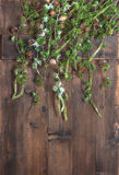 Christmas tree branches hanging over rustic wooden background Stock Image