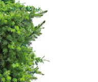 Christmas tree branches horisontal view Stock Photography