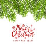 Christmas tree branches isolated Royalty Free Stock Image