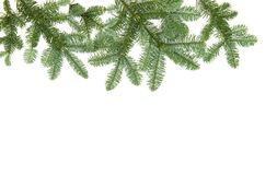 Christmas tree branches isolated white background Pine fir. Christmas tree branches isolated on white background. Pine fir royalty free stock photography