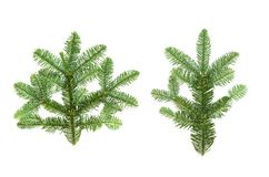 Christmas tree branches isolated white background pine fir. Christmas tree branches isolated on white background. Pine green fir royalty free stock images