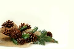 Christmas Tree Branches, Pine Cones, and Burlap Border White Bac Stock Photos