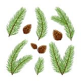 Christmas tree branches with pine cones. Christmas decorations. Set of fir-tree branches with pine cones isolated on white background, illustration Stock Photos