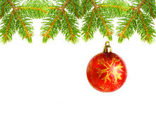 Christmas tree branches and  red ball. Christmas tree branches  isolated on white Royalty Free Stock Photo