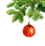 Christmas tree branches and  red ball. Christmas tree branches  isolated on white Stock Images