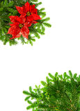 Christmas tree branches with red poinsettia flower Stock Photo
