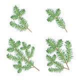 Christmas tree branches Royalty Free Stock Photo