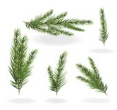 Christmas tree branches set. spruce fir-tree. Branches. Christmas tree branches set. spruce fir-tree. Branches of a fir tree isolated vector illustration on a Stock Image