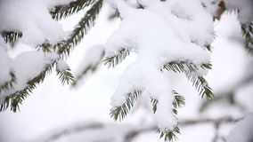 Christmas tree branches with snow stock video footage