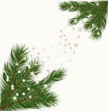 Christmas tree branches v Royalty Free Stock Image