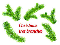 Christmas tree branches. Vector Christmas tree green branches Royalty Free Stock Image