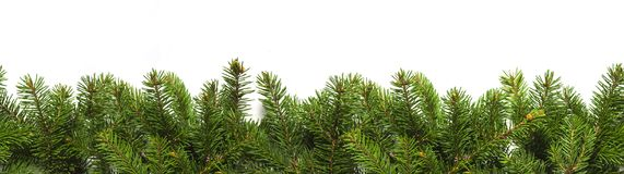 Evergreen branches on white Stock Images