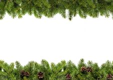 Evergreen branches on white Royalty Free Stock Image