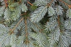 Christmas tree Christmas. New Year royalty free stock photography