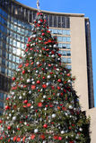 Christmas tree at city hall toronto Royalty Free Stock Photography