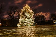 Christmas tree in city park at night Royalty Free Stock Photography