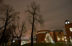 Christmas tree in city park at night Stock Photography