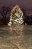 Christmas tree in city park at night Royalty Free Stock Photos