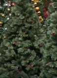 Christmas tree. Close look at Christmas tree stock photo