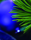Christmas Tree Close-Up. Close-Up image of Christmas Tree with Blue Ornaments in the background Stock Photos
