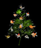 Christmas tree concept with goldfish ornament on black background royalty free stock images