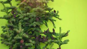 Christmas tree with cones and star without toys stock footage